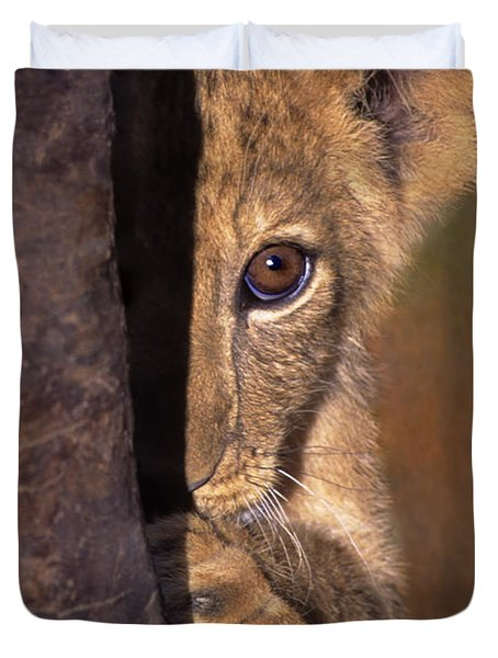 Duvet Cover featuring the photograph A Lion Cub Plays Hide And Seek Wildlife Rescue by Dave Welling