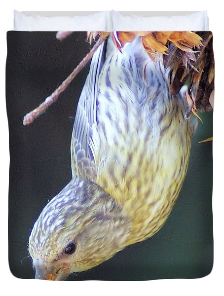 A Little Bird Eating Pine Cone Seeds  Duvet Cover by Jeff Swan