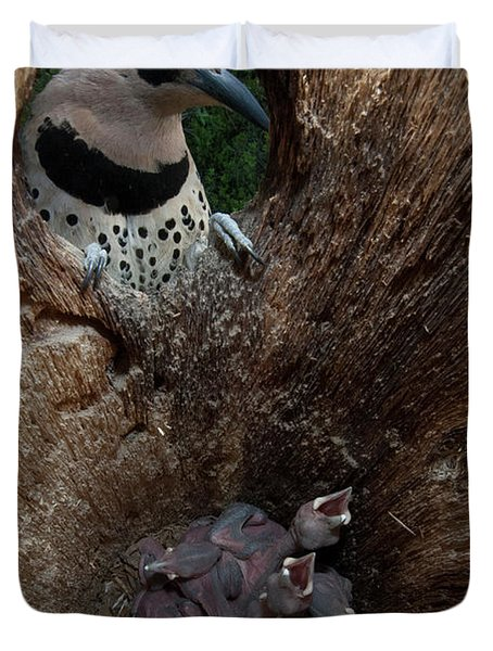 A Northern Flicker With Chicks Duvet Cover