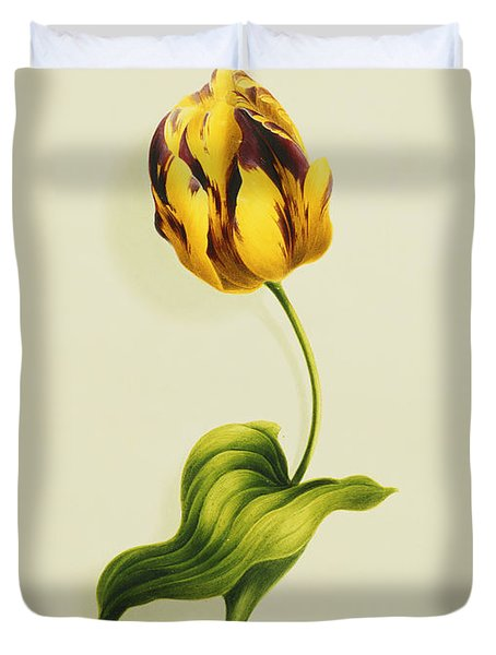 A Parrot Tulip Duvet Cover by James Holland