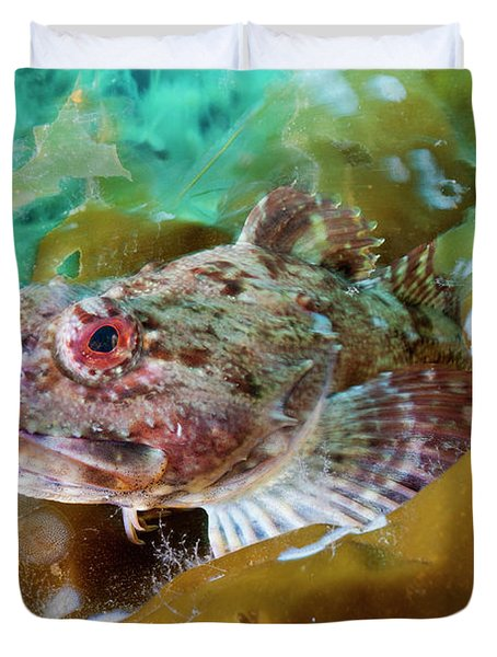 A Sculpin Fish In Algal Gardens Duvet Cover