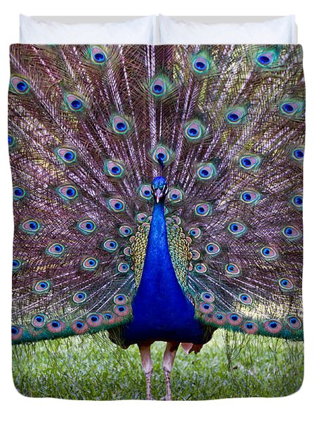 A Vargos Peacock Duvet Cover by Tim Stanley
