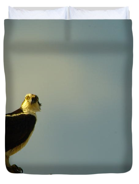 A Wide Eyed Osprey Duvet Cover by Jeff Swan