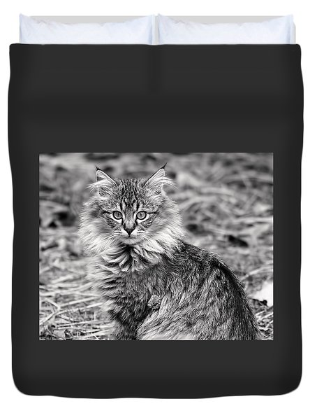 A Young Maine Coon Duvet Cover by Rona Black