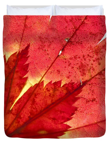 Acer From Beneath Duvet Cover by Anne Gilbert