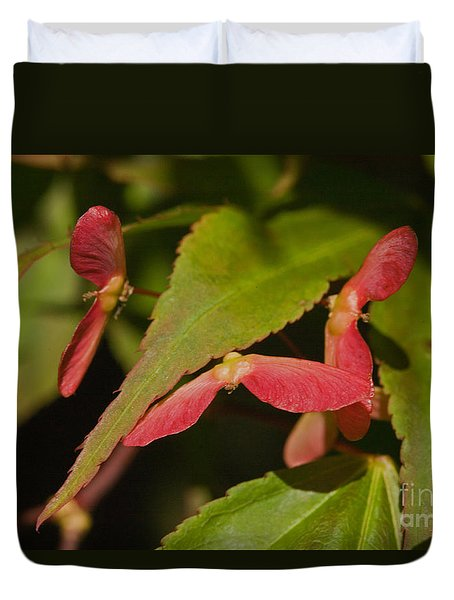 Duvet Cover featuring the photograph Acer Wings by Liz  Alderdice