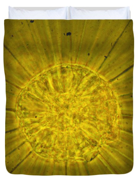 Actinophrys Sol Lm Duvet Cover by James W Evarts