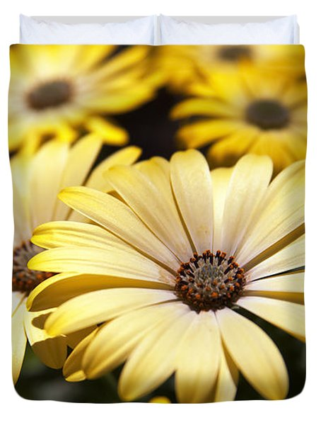 African Daisies Duvet Cover by Caitlyn  Grasso