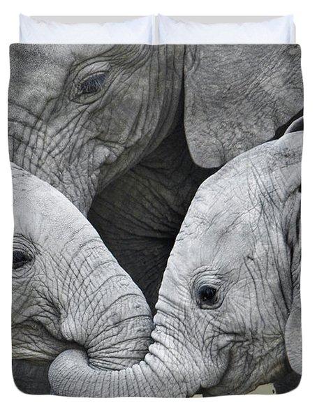 African Elephant Calves Loxodonta Duvet Cover