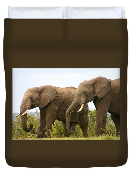 African Elephants Duvet Cover