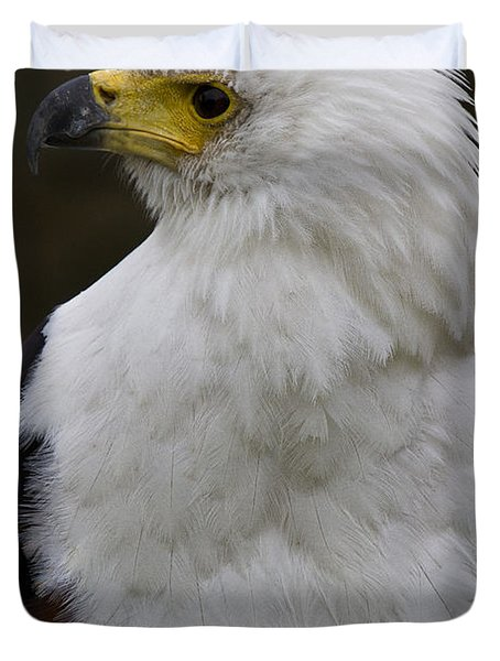 African Fish Eagle 4 Duvet Cover by Heiko Koehrer-Wagner