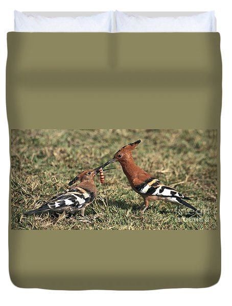 African Hoopoe Feeding Young Duvet Cover by Liz Leyden