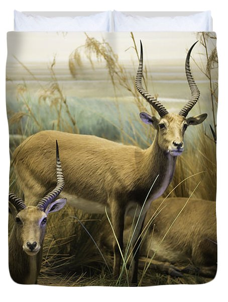 African Impalas Duvet Cover by Diego Re
