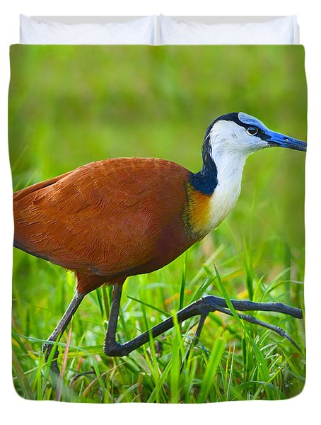 African Jacana Duvet Cover by Tony Beck