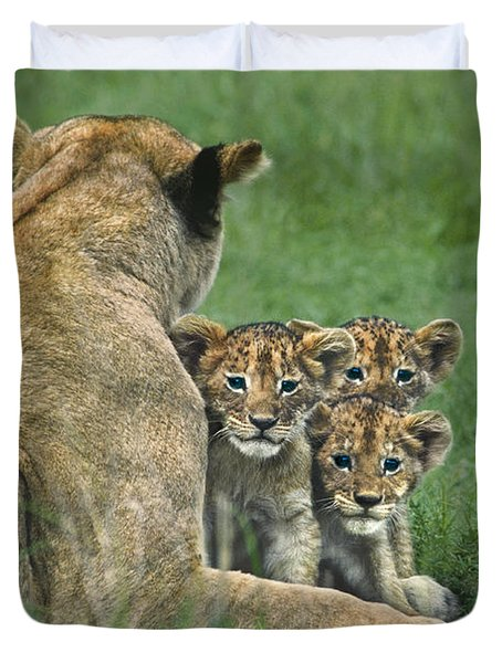 Duvet Cover featuring the photograph African Lion Cubs Study The Photographer Tanzania by Dave Welling