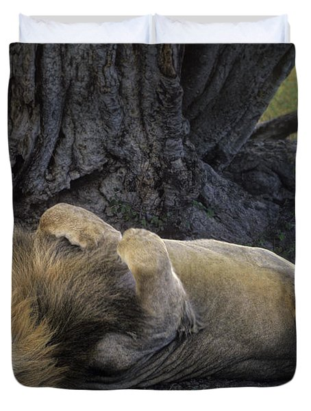 African Lion Panthera Leo Wild Kenya Duvet Cover by Dave Welling
