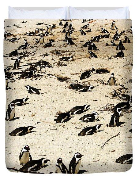 African Penguins Duvet Cover