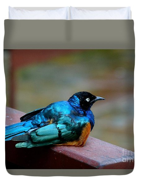 African Superb Starling Bird Rests On Wooden Beam Duvet Cover