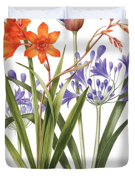 Agapanthus And Crocosmia Duvet Cover