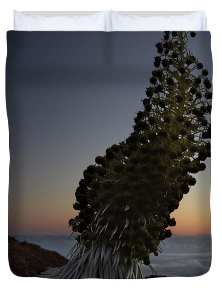 Ahinahina - Silversword - Argyroxiphium Sandwicense - Summit Haleakala Maui Hawaii Duvet Cover by Sharon Mau