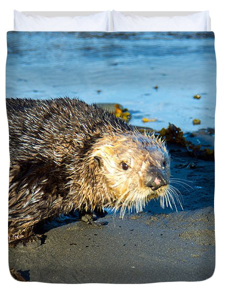 Alaska Sea Otter Duvet Cover by Debra  Miller