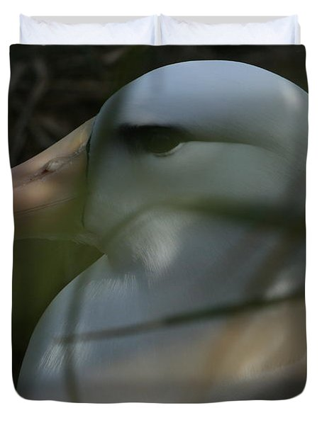 Duvet Cover featuring the photograph Albatross by Amanda Stadther