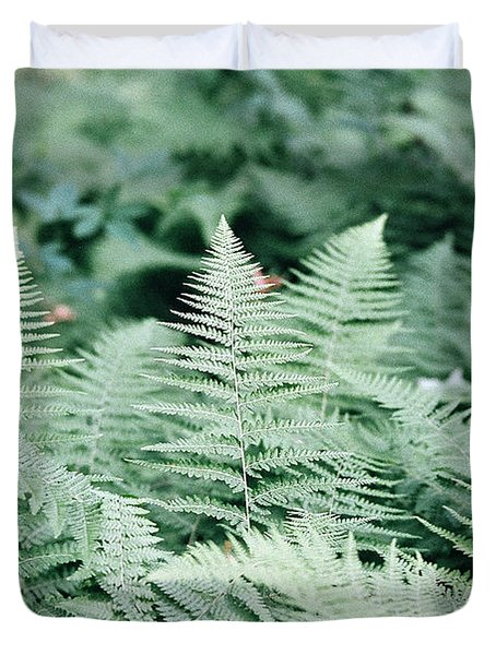 Duvet Cover featuring the photograph Algonquin Ferns by David Porteus