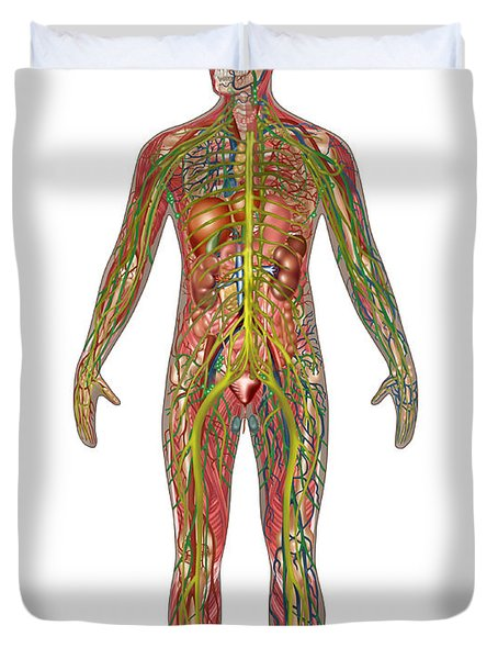 All Body Systems In Male Anatomy Duvet Cover