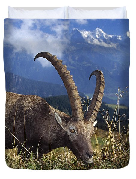 Alpin Ibex Male Grazing Duvet Cover by Konrad Wothe