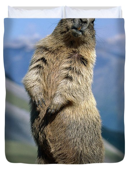 Alpine Marmot Sitting Up Duvet Cover