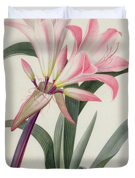 Amaryllis Belladonna, 1761 Duvet Cover