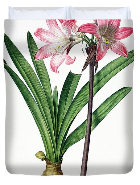 Amaryllis Belladonna From Les Liliacees Engraved By De Gouy Duvet Cover by Pierre Joseph Redoute
