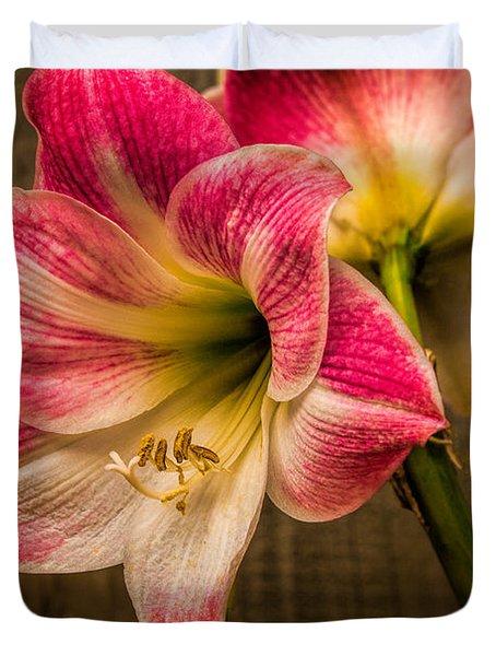 Amaryllis Blooms Duvet Cover