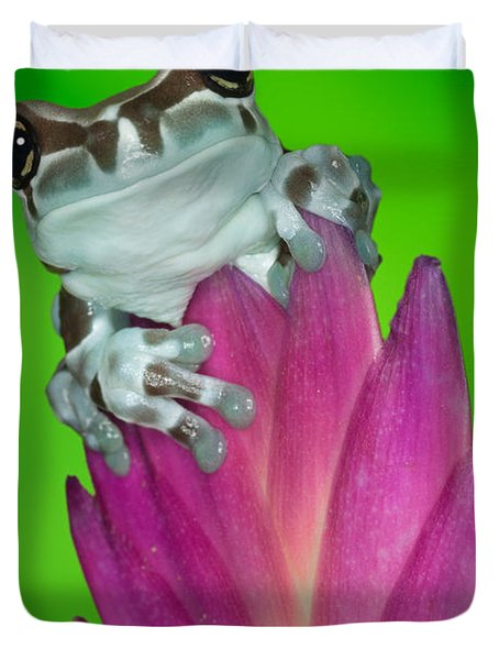 Amazon Milk Frog Trachycephalus Duvet Cover by Dennis Flaherty