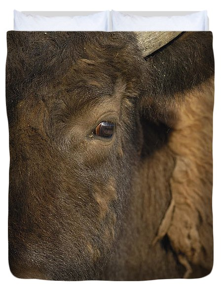 American Bison  Male Wyoming Duvet Cover by Pete Oxford
