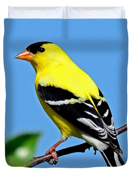 American Goldfinch Duvet Cover by Rodney Campbell