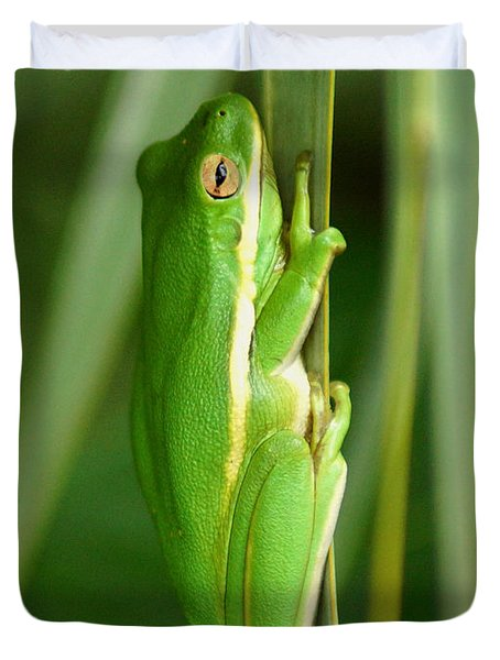 American Green Tree Frog Duvet Cover