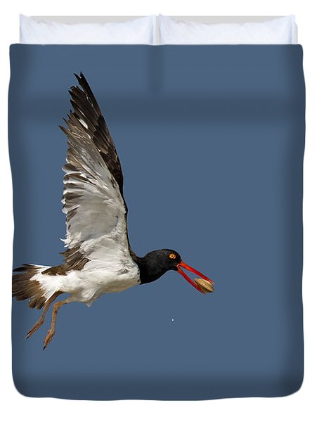 American Oystercatcher In Flight Duvet Cover