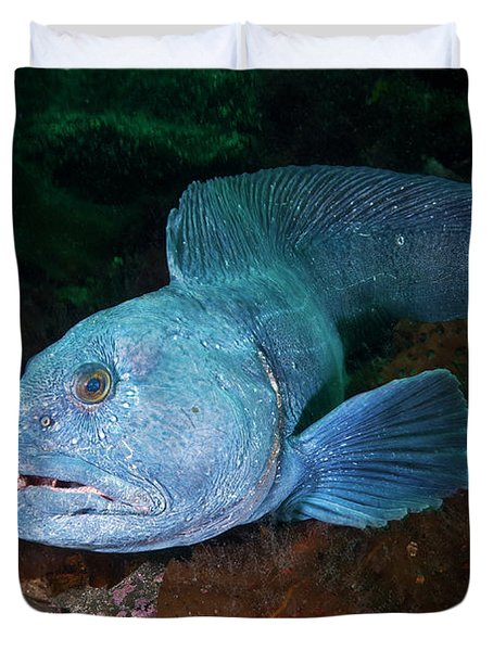 An Atlantic Wolffish Searches Duvet Cover