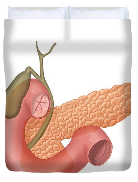 Anatomy Of Biliary System Duvet Cover