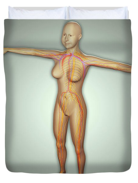 Anatomy Of Female Body With Arteries Duvet Cover by Stocktrek Images