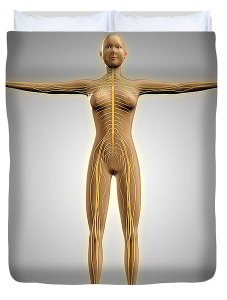 Anatomy Of Female Body With Nervous Duvet Cover by Stocktrek Images