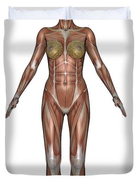 Anatomy Of Female Muscular System Duvet Cover