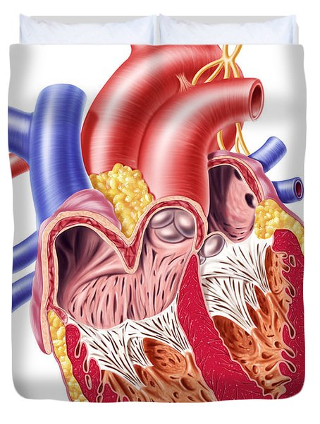 Anatomy Of Human Heart, Cross Section Duvet Cover by Leonello Calvetti