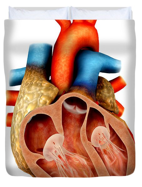 Anatomy Of Human Heart, Cross Section Duvet Cover by Stocktrek Images