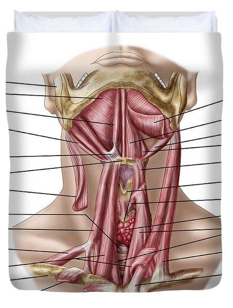Anatomy Of Human Hyoid Bone Duvet Cover
