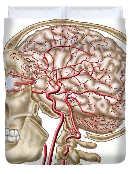 Anatomy Of Human Skull, Eyeball Duvet Cover by Stocktrek Images