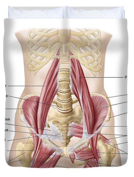 Anatomy Of Iliopsoa, Also Known Duvet Cover