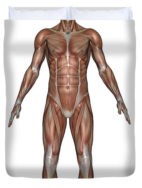 Anatomy Of Male Muscular System, Front Duvet Cover by Elena Duvernay