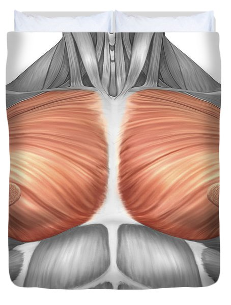 Anatomy Of Male Pectoral Muscles Duvet Cover by Stocktrek Images